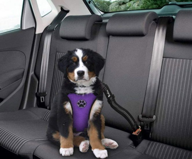 Car Vest Harness with Safety Seat Belt for Dogs