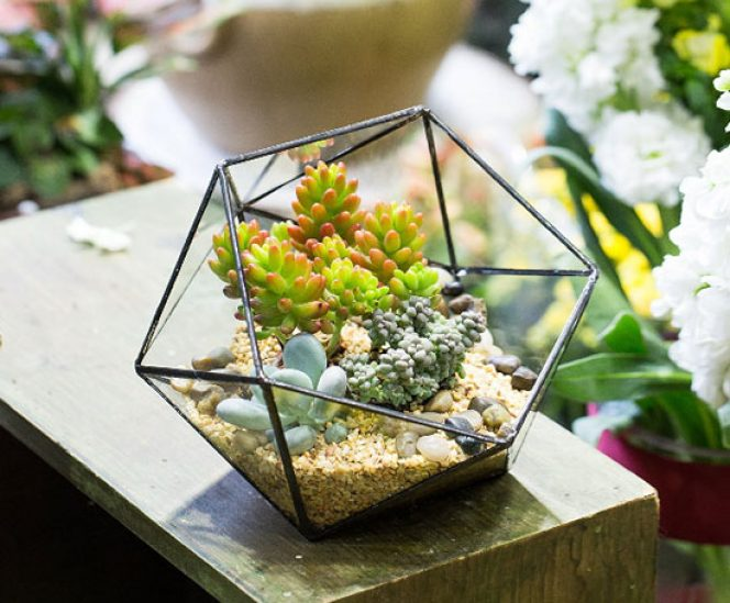 Handmade Glass Geometric Terrarium for Succulents