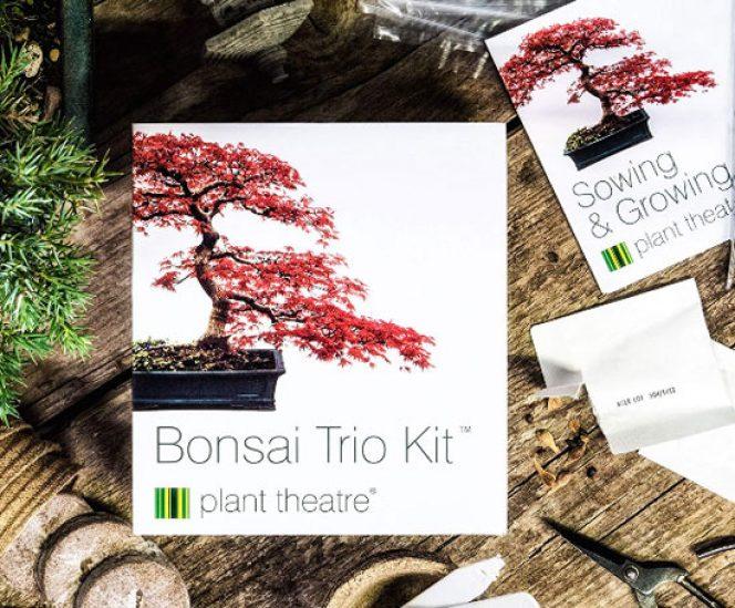 Bonsai Trees to Grow – Trio Kit