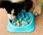 Slow Eating, Fun Foraging Dog Bowl